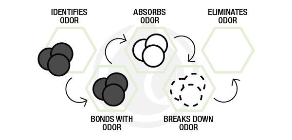 eliminating odors